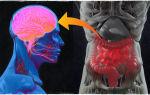 Как и чем уменьшить грелин (гормон голода) в организме?