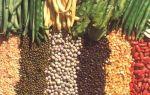 Гликемический индекс бобовых продуктов