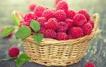 Польза и вред малины при сахарном диабете 2 типа