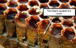 Как есть пчелиную пергу при сахарном диабете