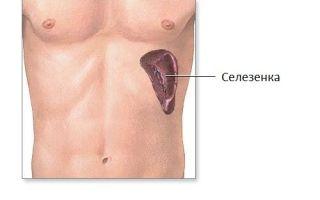 Как узнать, болит поджелудочная железа или селезенка?