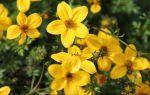 Особенности и правила приема трав для поджелудочной железы при лечении панкреатита