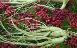 Травы для снижения сахара в крови рецепты для диабетиков