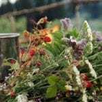 Травы, снижающие сахар в крови и полезные при диабете
