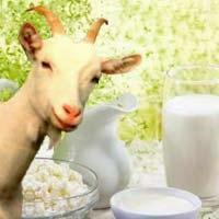 Можно ли козье молоко при воспалении поджелудочной железы?